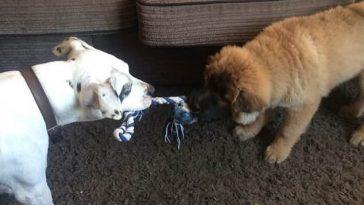 Anglia: Bebeluș de doar 12 zile, ucis de câinele familiei. Părinții au fost arestați și acuzați